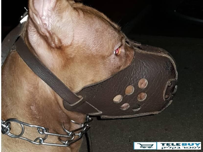 כלבים כללי   בקריות