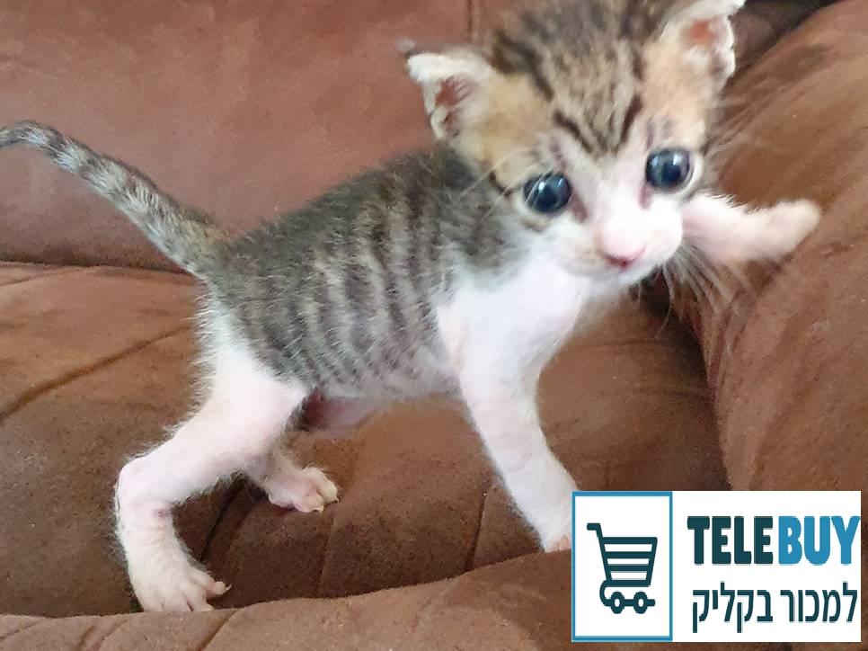 חתולים אחר   בתל אביב-יפו