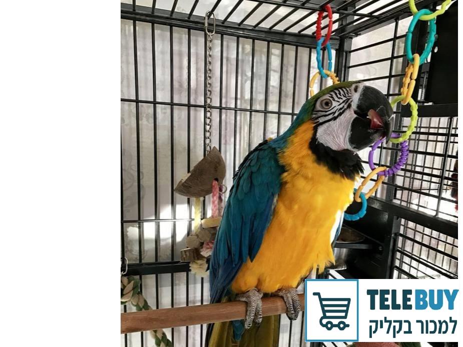בעלי כנף תוכים   ביישובים באזור ירושלים