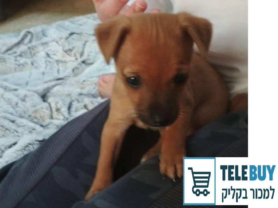 כלבים מעורב   בתל אביב-יפו