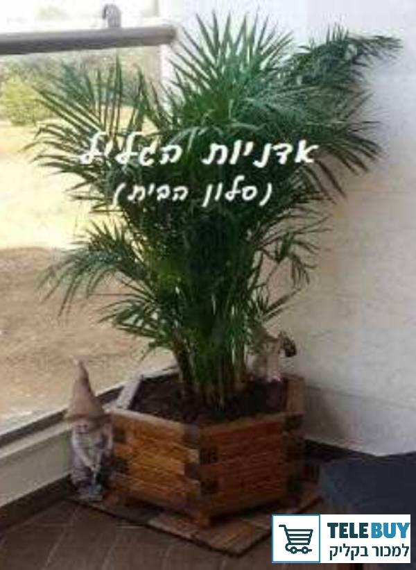 תמונה של ריהוט לגינה ולחצר בראשון לציון