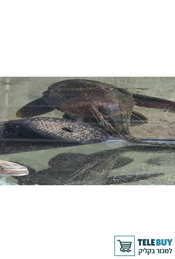 תמונה של דגים- כללי בעמק חפר