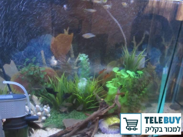 תמונה של דגים- כללי בבית-שמש והסביבה