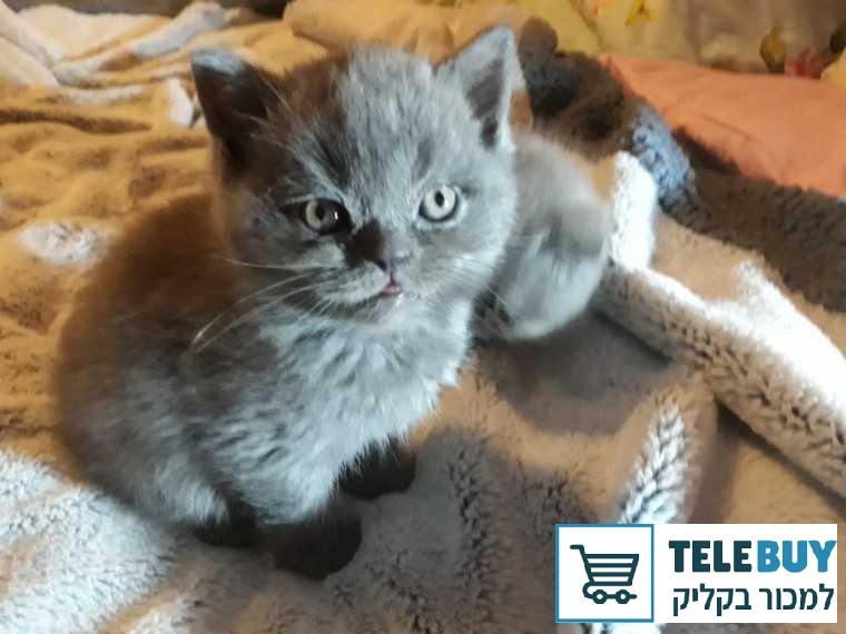 עדכני לוח חיות מחמד » TeleBuy SY-06