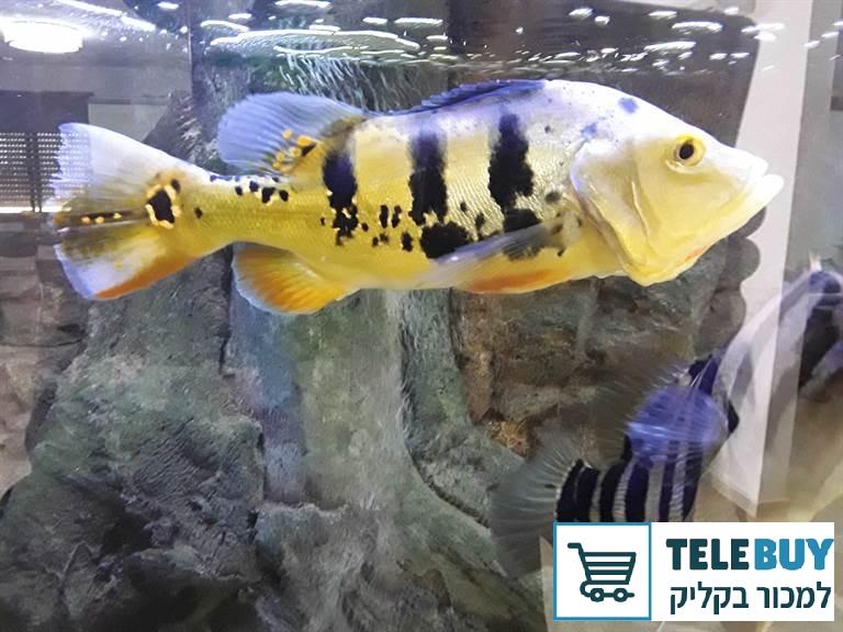 דגים ציקלידים בבאר-שבע והסביבה