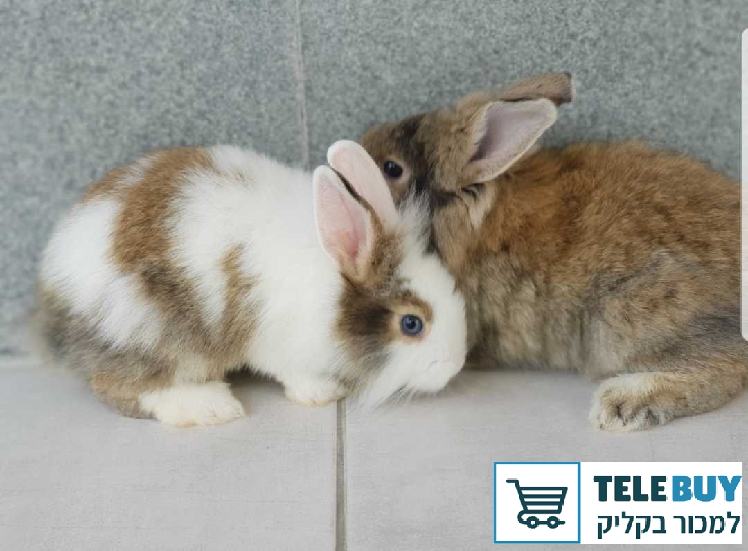 מכרסמים ארנבות בחיפה