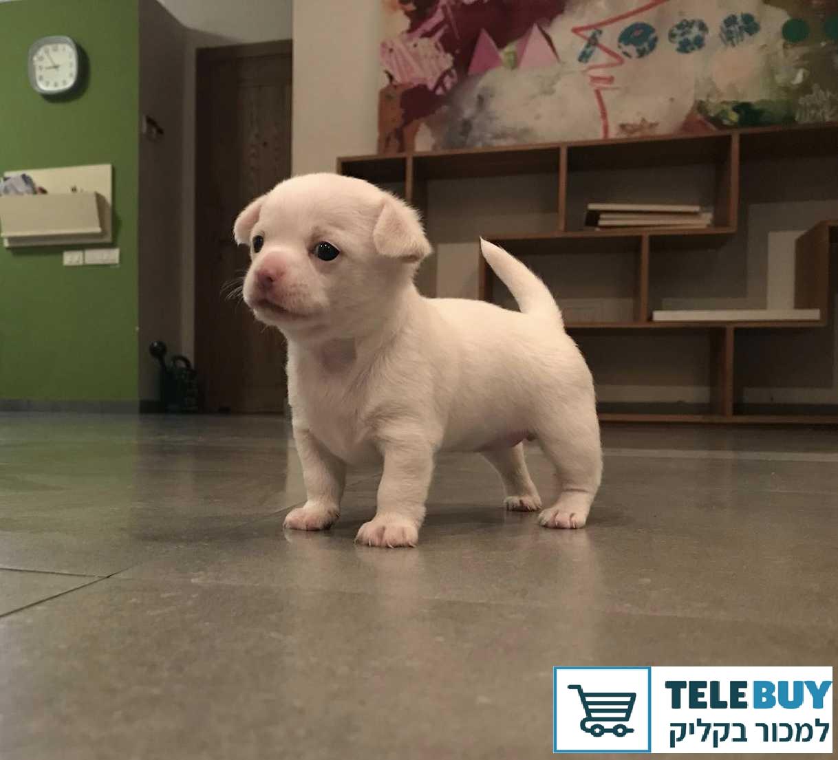 הוראות חדשות לוח חיות מחמד » TeleBuy VB-38